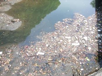 浜離宮付近のプラスチックごみ