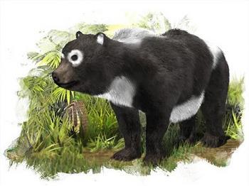 パンダ祖先